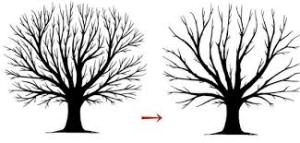 What Your Arborist Should Tell You #2 – Invermere Tree Care Tree Schematic on tree cable, tree diagram, tree cell, tree visualization, tree switch, tree guide, tree maintenance, tree photograph, tree tutorial, tree anatomy, tree graph, tree wire, tree project, tree blueprint, tree display, tree roots silhouette, tree box, tree 3d, tree trench, tree chart,