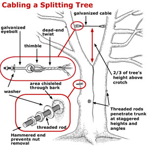 Tree Surgery Amp Supplemental Support Systems Invermere